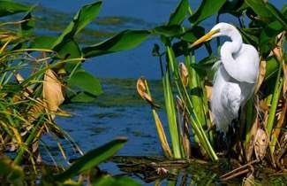 Tidewater Preserve